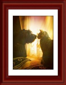 Vega and Rosie