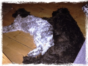 Haiku looking after her big sister, Vega